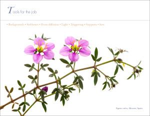 Field Studio ebook.050115.13