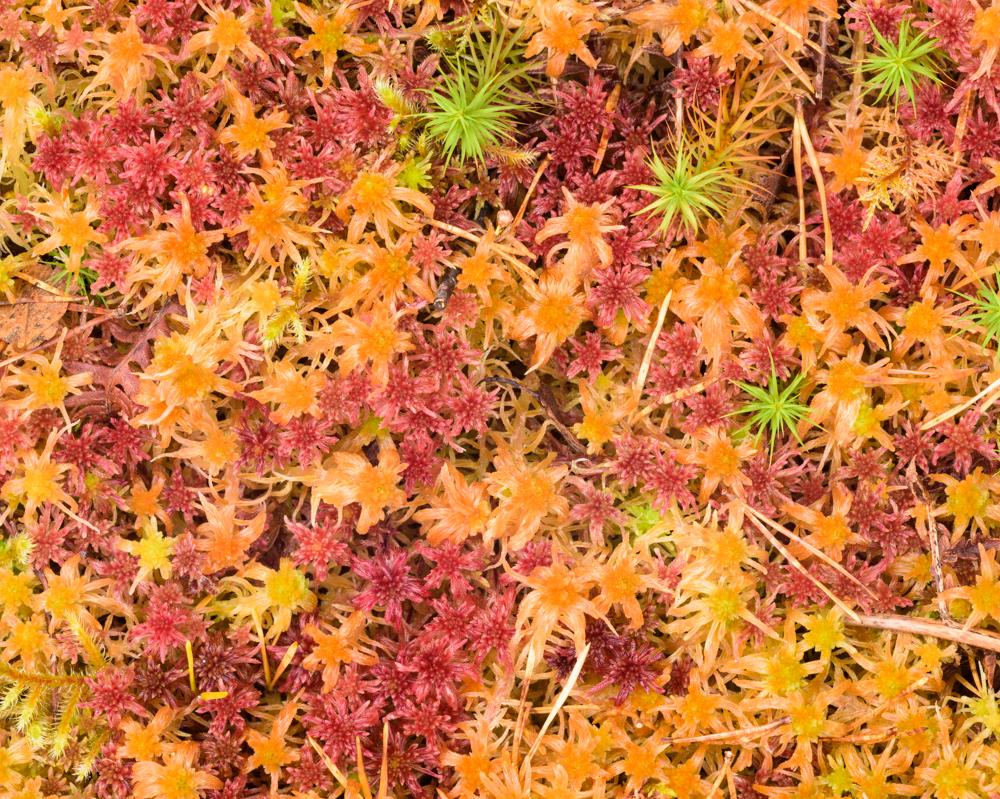 Mosses, Beinn Eighe NNR, Wester Ross, Scotland